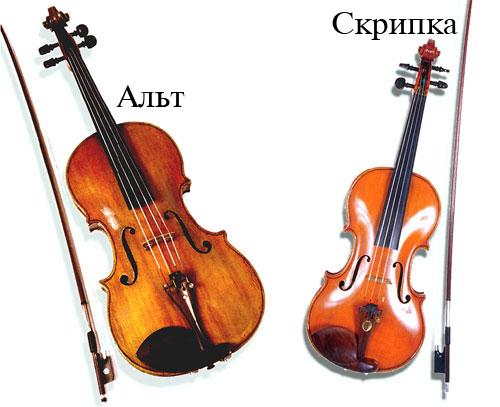скрипка и альт сравнение